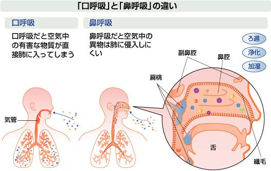 口呼吸と鼻呼吸の違い
