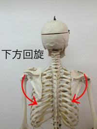 腕を押し出す動き(背中を開く)
